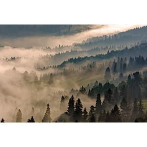 Fototapeta na wymiar - Krajobraz otulony mgłą