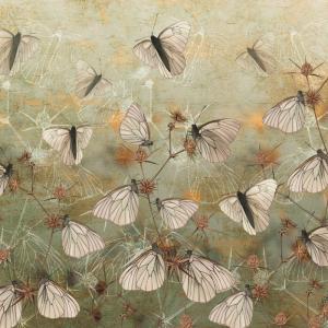 Fototapeta na wymiar - Motyle